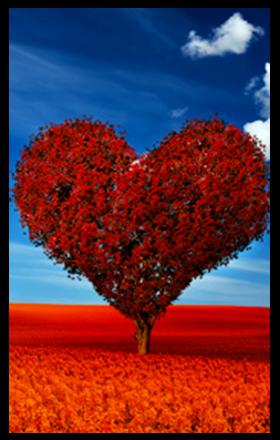 Amor gratis